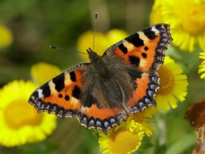 Free butterfly and bug hunt 22 June 2019