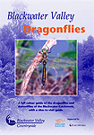 Blackwater Valley dragonflies