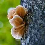 Winner - Adult Category - Dave Faulkner - Porcelain Fungus