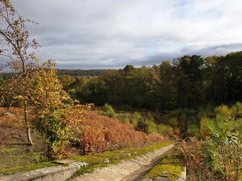March walk – Hartley Wintney